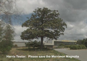 Harris Teeter please save the Merrimon Magnolia